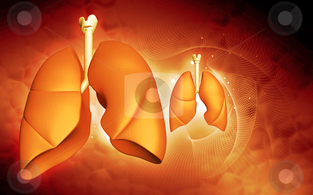 Human lungs stock photo,  human lungs  in color background by dileep