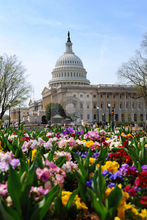 Capitol Building, Washington DC stock photo, WASHINGTON DC - APR 4, Capitol Hill Building, the symbolic landmark of US government, with flowers on April 4, 2010 in Washington DC. by rabbit75_cut