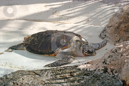 Turtle stock photo, A turtle resting, asleep on the beach by Lucy Clark