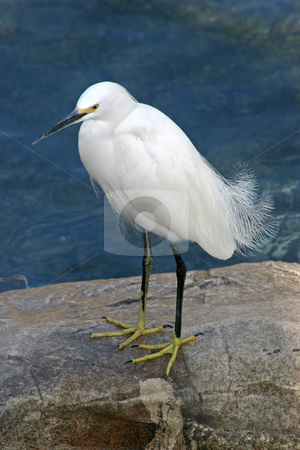 Bird stock photo, A bird standing on a rock by Lucy Clark
