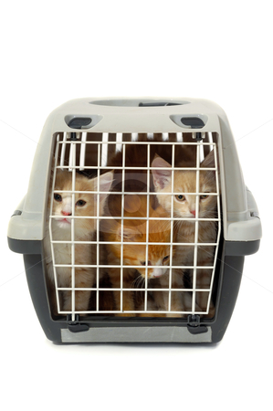 Kittens in transport box isolated on white background stock photo, Kittens in transport box on white background by Lars Christensen
