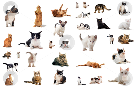 Cats in studio stock photo, cats and kitten on a white background by Bonzami Emmanuelle
