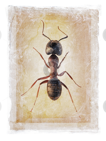 Grunge Ant stock photo, Grunge dirty photomanipulation of an ant. by Stocksnapper
