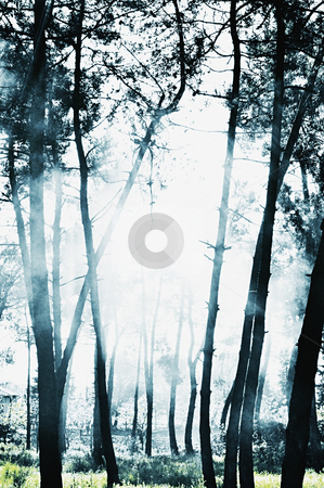 Misty forest scene with beams of sunlight stock photo, 	 Misty forest scene with beams of sunlight by HypnoCreative