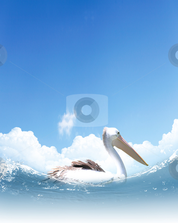 Picture of white pelican swimming stock photo, Picture of white pelican swimming on wavy water by Sergey Nivens
