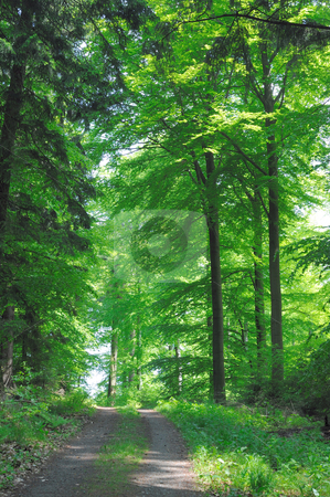Broadleaf forest stock photo, Broadleaf forest on a hill near Heidelberg, Germany by heitipaves