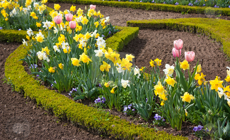 Garden with spring blossom stock photo, Colorful garden in spring, with tulips, narciss, shrub by tristanbm