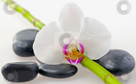 Orchid stock photo, Close up of orchid with black stones and bamboo by Fabio Alcini