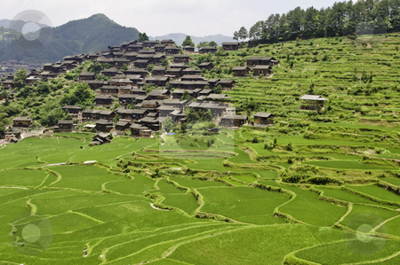 Rice Terraces stock photo, Large rice terraces with ethnic Chinese minority village by elemery