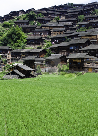 Chinese Minority Village stock photo, A rice field surrounded by ethnic Chinese Miao Village by elemery