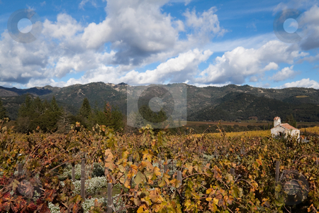 Napa Valley stock photo, Grapevines with an old church house in the background by Kevin Tietz