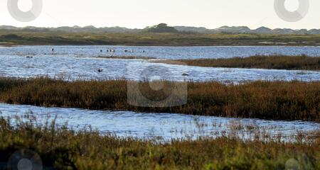 Wetland stock photo, wetland near the Ormond Beach california oxnard by Henrik Lehnerer