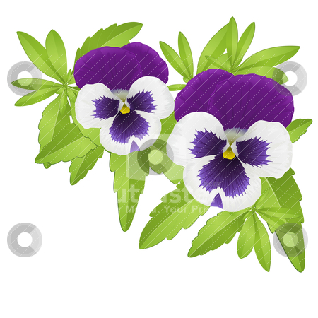 Pansies stock vector clipart, Pansy floral element composed with violet pansies by Laurent Renault