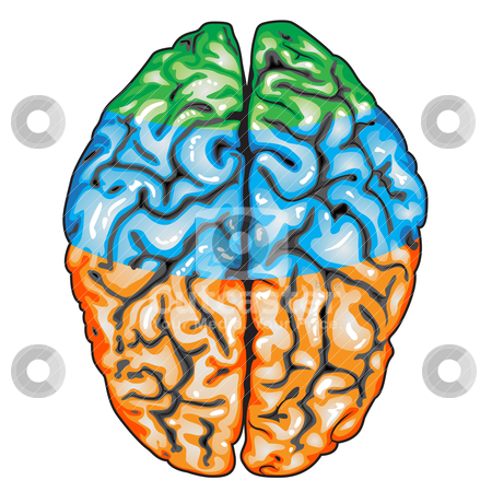 Human Brain Top View Stock Vector