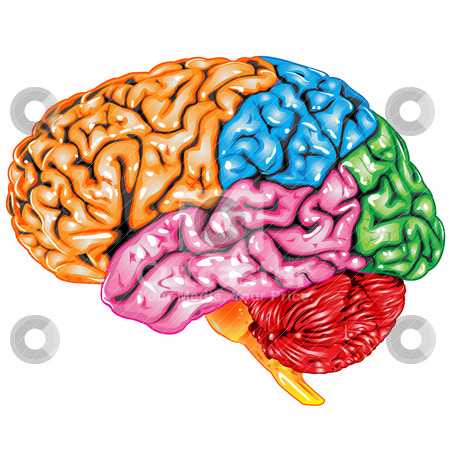 Human brain lateral view stock vector similar images human brain top view ccuart Choice Image