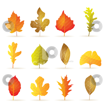 Different kinds of tree autumn leaf icons  stock vector clipart, different kinds of tree autumn leaf icons - vector icon set by Stoyan Haytov