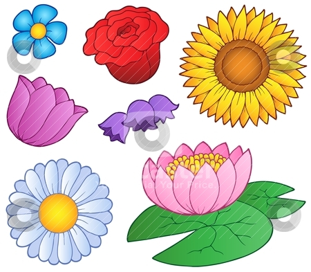 Various flowers set stock vector clipart, Various flowers set - vector illustration. by Klara Viskova