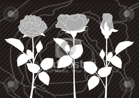 Roses silhouettes stock vector clipart, Illustration of white roses silhouettes on dark background. by fractal.gr