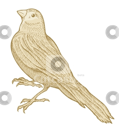 Bird sketch stock vector clipart, Bird sketch made with pen and ink isolated on white background colored with beige tones. by fractal.gr