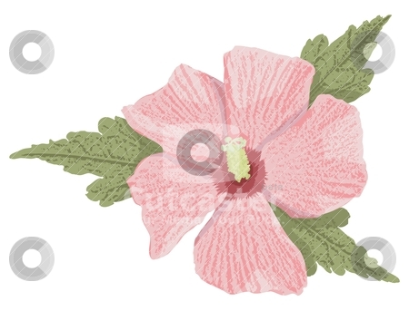 Pink hibiscus stock vector clipart, Pink hibiscus flower with grunge shading isolated on white background. by fractal.gr